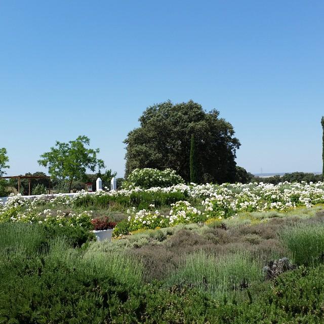 Hoy nos tomamos la crepe en Jardines del Campo Open Day#jardinesdelcampo #oropesa #campo #openday #crepes #evento