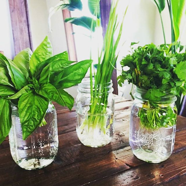 Herbs…botanics#repost from @nutritionschool #ideas #cool #healthy #food #botanics #herbs #recipes #recetas #hierbas
